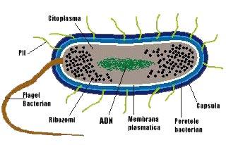 Radiatiile UV ucid microorganismele